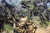 middle of a bonsai jungle