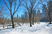 foto of storms  - Naked trees in Central Park New York City after a winter storm with the city - JPG