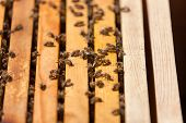 stock photo of bee-hive  - closeup of bees on a honeycomb of a big hive - JPG