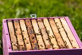pic of bee-hive  - closeup of bees on a honeycomb of a big hive - JPG