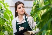 foto of greenhouse  - Portrait of a young woman at work in greenhouse - JPG