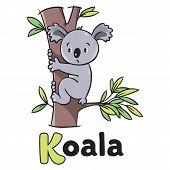 picture of koalas  - Children vector illustration of funny koala bear on eucaliptus tree - JPG