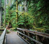 Dense West Coast Forest