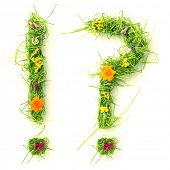 Question mark & exclamation mark made of flowers and grass isolated on white