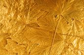 golden maple tree leaves background
