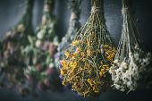 Hanging Bunches Of Medicinal Herbs And Flowers, Focus On Hypericum Flower St. Johns Wort. Herbal Med poster