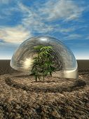 Plant under a glass dome in desert