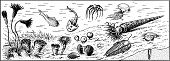 picture of paleozoic  - Many different sea animals and fish of paleozoic era - JPG