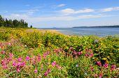 Wildflowers on Vancouver Island coast, Canada