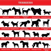 Set Of 20 Terrier Dogs. Vector Set Of Terrier Breeds Dogs Standing In Profile. Isolated Dogs Breed S poster