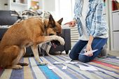 Portrait Of Unrecognizable Woman Telling Off Dog For Making Mess At Home, Copy Space poster