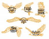 Eagle Bird Sketches With Letterings. Vector Hawk, Falcon Or American Eagle Spread Wings, Flying Bird poster
