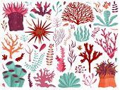 Set Of Underwater Ocean Coral Reef Plants, Corals And Anemones. Aquatic And Aquarium Seaweeds, Tropi poster