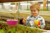 Youth. Concept Of Healthy Youth With Good Future. Youth In Face Of Happy Little Boy Hold Fresh Apple poster