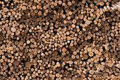 Logs Stack
