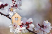 Closeup Wooden House With Hole In Form Of Heart Surrounded By White Flowering Branches Of Spring Tre poster