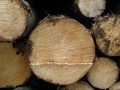 Chopped Log Close Up