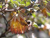 20050926 Cape Naturaliste  Ape