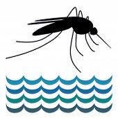 Mosquitos, agua estancada