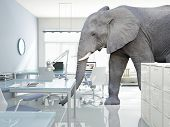 picture of working animal  - huge elephant walk in modern office - JPG