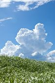 stock photo of thunderhead  - This is a picture of grass and thunderhead - JPG