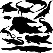 Detailed Vectoral Crocodile Silhouettes