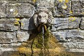 Lion's Head Drinking Fountain At The Chalice Well