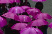 Kapan Nikko Tosho-gu Shinto shrine People under purple umbrellas elevated view