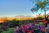Arizona de paisagem do deserto