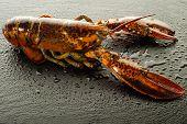 lobster over black stone