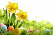 stock photo of meadows  - Easter eggs on meadow with daffodil flower - JPG
