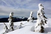 Winter In Coast Mountains