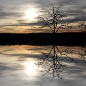Tree Silhouette, Reflecting In A Lake, Mystic Scenery