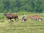 Raking Hay 2