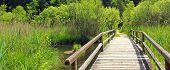 Wooden Bridge In The Bogland