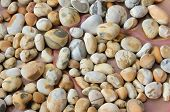 Pebble Stones With Natural Pattern