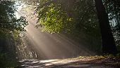 Rays of light in the forest