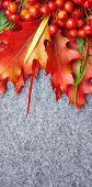 red rowan lying on autumn leaves.