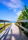 Boardwalk Among Sea Oats To Beach In Florida