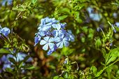 Beautiful Flowers In Turkish Garden