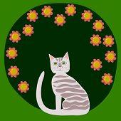 Striped cat front flowering bush