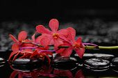Red branch orchid flower and therapy stones