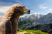 Aerial View Of Alps Mountains Landscape With Golden Eagle