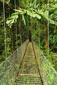 Empty Hanging Metal Bridge In Tropical Forest
