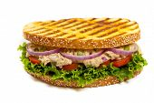 pic of tomato sandwich  - Grilled Tuna Panini Sandwich on white background - JPG