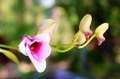 picture of orquidea  - Beautiful purple orchid in the nature garden - JPG