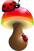 Ladybugs On Toadstool