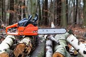 Chainsaw on a woodpile outside in the forest
