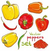 Vector Illustration Of Peppers, Chili Peppers, Cayenne And Spice
