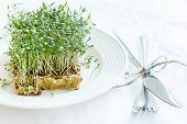 Fresh green watercress  on plate